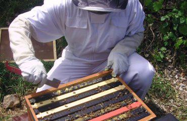 propolis hars van bijen